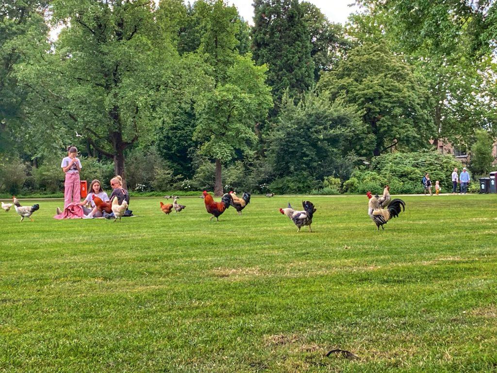 Julianapark - kippen
